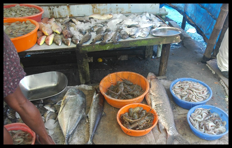 Commercial fish farming urged