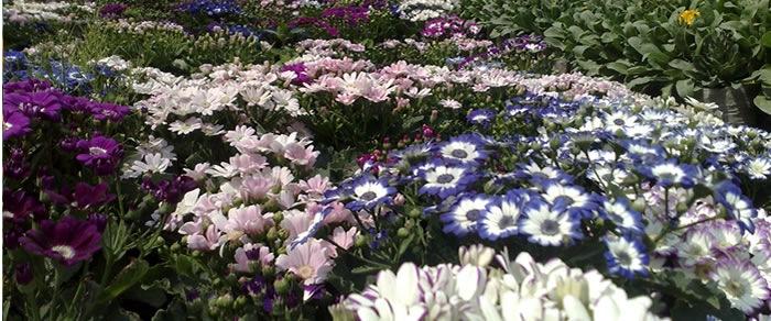 Entrepreneurs urge government to declare floriculture niche area