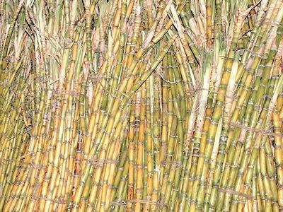 Plea to fix sugarcane price