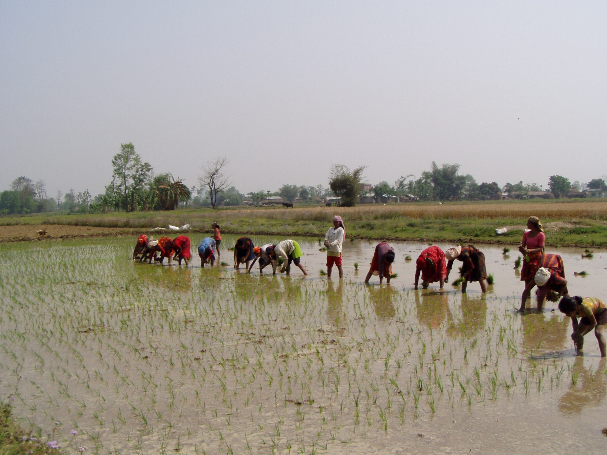 Agriculture output expands by 4.7 per cent